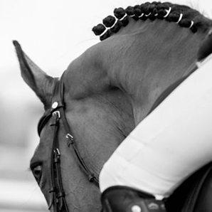 nos chevaux - haras des étangs
